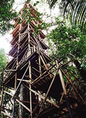 Bataburo Lodge - Canopy tower